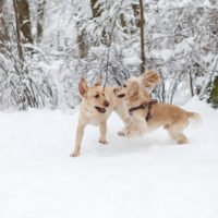 Hot and Cold Weather Safety