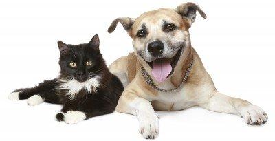 dog and cat buddies