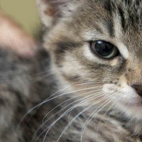 Pet Adoption Locations