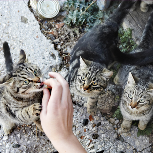 group of stray or feral cats being fed