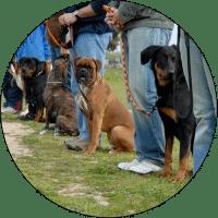 dog-classes