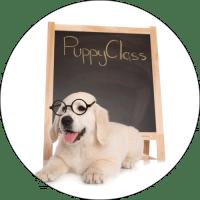 puppy-class