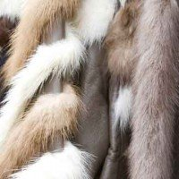 The Cat and Dog Fur Industry
