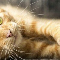 The Truth About Declawing