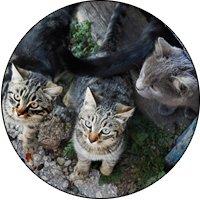 cat-overpopulation