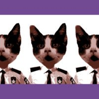 Barn Buddies & Warehouse Cats